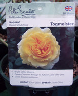 Rose - Shrub 'Togmeister' 4L
