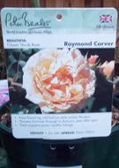 Rose - Shrub 'Raymond Carver' 4L