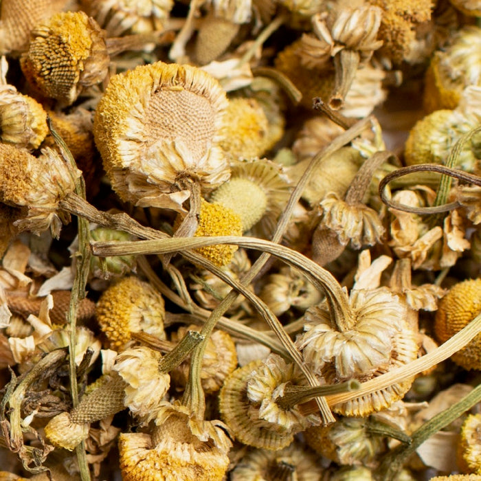 close up of loose organic chamomile flower tea