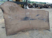 Walnut Slab WALSLB61H