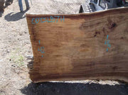 Cottonwood Slab COTSLB7H