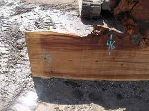 Cottonwood Slab COTSLB9D