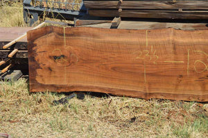 Walnut Slab WALSLB97B