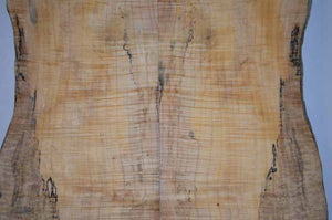 Maple Tonewood MAPTON2
