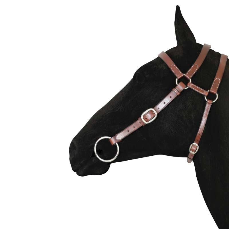 Tanami Barcco Extended Bridle Head 7/8inch Leather