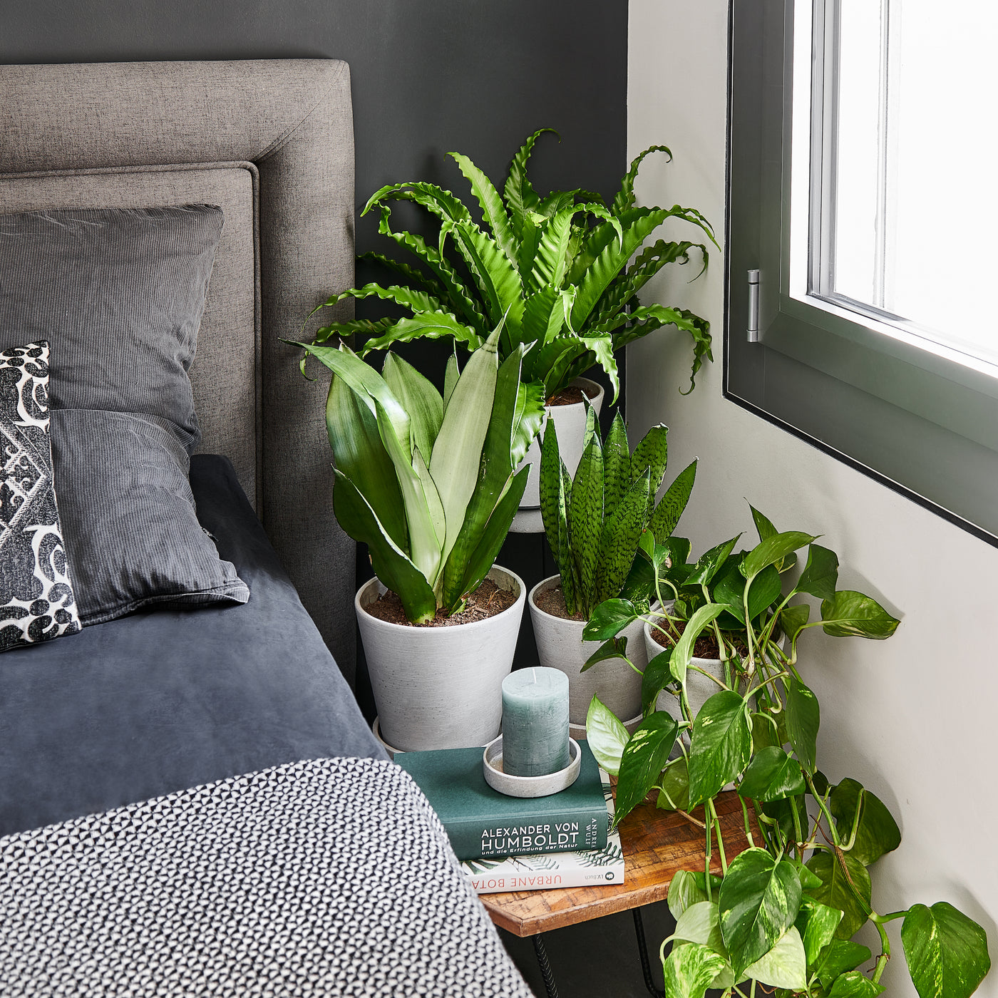 The role of plants in your bedroom - by Mary and Plants