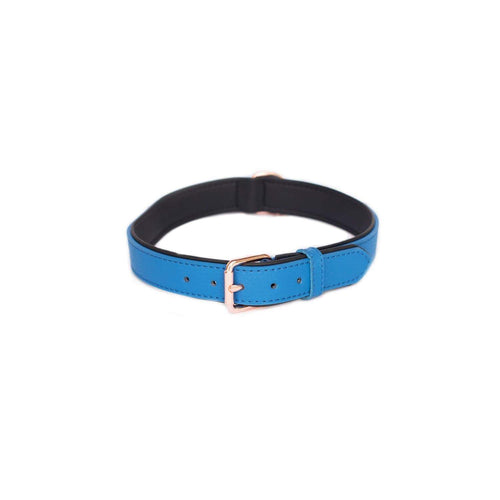 Vivid Collection Collar - Cobalt X-Large