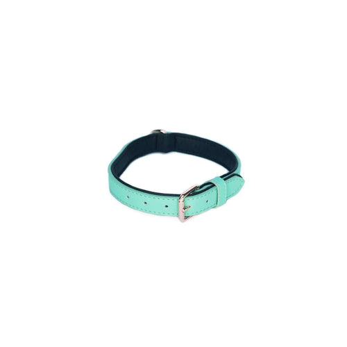 Vivid Collection Collar - Teal Medium