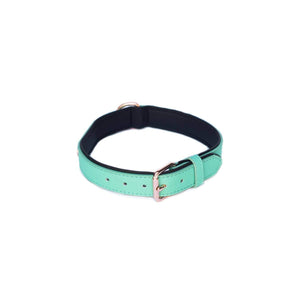 Vivid Collection Collar - Teal Small