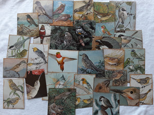 Bird Ephemera Album- Set of 70+- SS