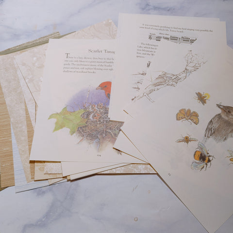 Wild Birds Paper Collection  - LZ