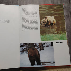The Big Picture Book of Animals - LZ