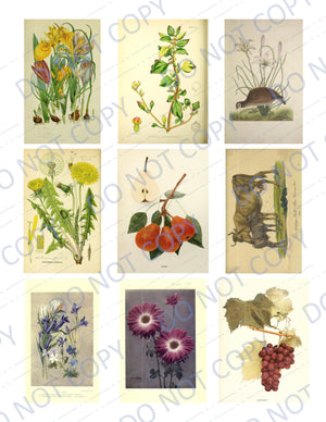 Beauty of the Earth DIGITAL Ephemera Pack - 45 Images