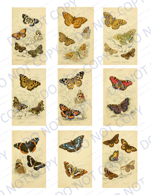 British Butterflies PRINTED Ephemera Pack - 27 Images