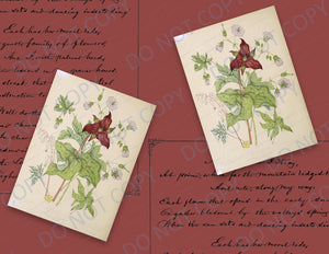 Canadian Wildflower Script PRINTED Journal Pages