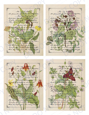 Canadian Wildflower Script PRINTED Journal Cards