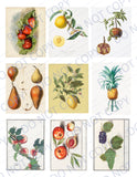 Juicy Fruit PRINTED Ephemera Pack - 45 Images