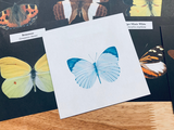 Butterfly / Moth Perforated Papers Set of 8 - LZ