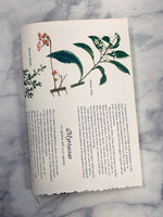 Nature Book Page Booklet Journal - LZ