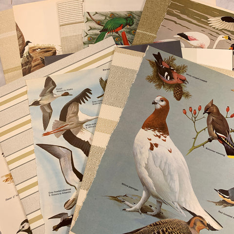 Stripes & Birds Wallpaper & Book Page Lot of 16 - LZ