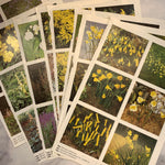 Double-Sided Botanical Book Pages set of 10 - LZ
