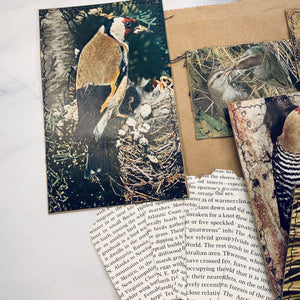Vintage Birds Journal Cards & Tags - LZ