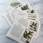 Vintage 1934 Tree Identification Pages - LZ
