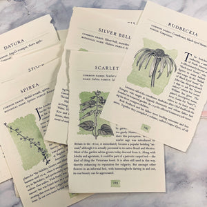 Botanical Book Pages set of 20 - LZ