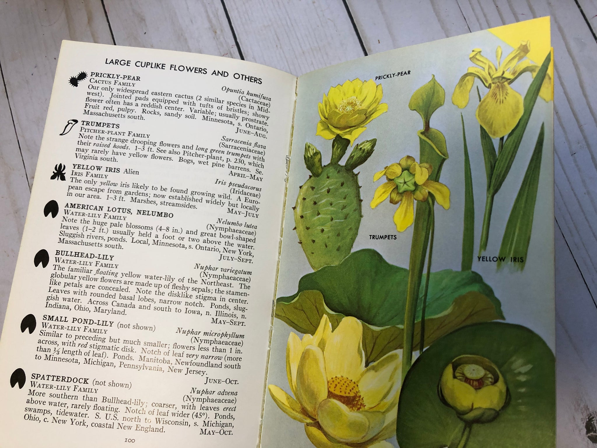 Field Guide to Wildflowers JH