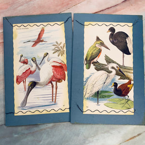 Tropical Birds Stitched Cardstock Journal Covers set of 2 - LZ
