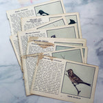 Vintage 1931 Bird Identification Pages - LZ