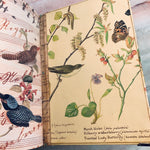 Garden Diary by Kimberly Clayton (AprCh)