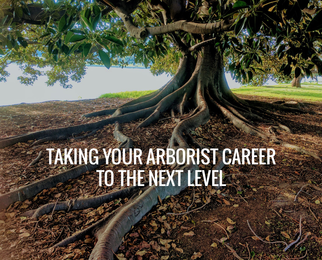 Advancing Your Arboristry Career