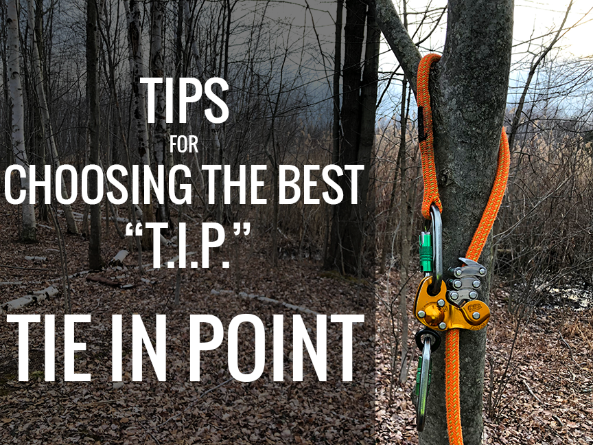 Choosing Your Tie-In Point for Tree Climbing