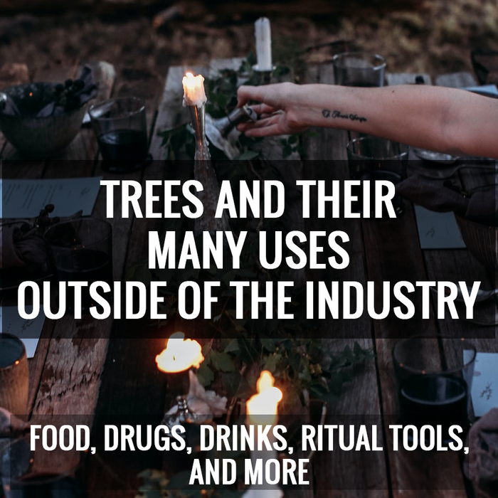 Trees and Their Many Uses Outside of the Industry