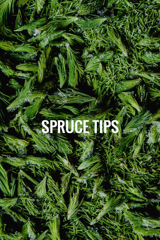 spruce tree tips