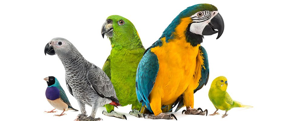 Quality Bird & Pet Supplies