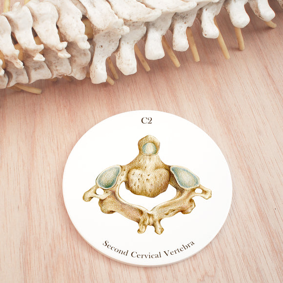 2nd Cervical Vertebra Ceramic Coaster