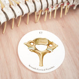 7th Cervical Vertebra Ceramic Coaster