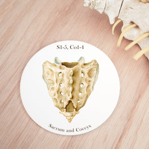 Sacrum and Coccyx Vertebra Coaster