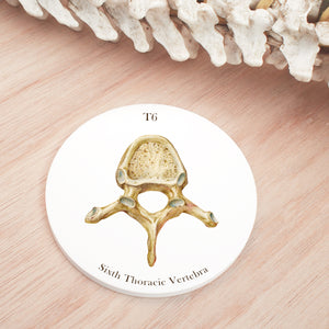 6th Thoracic Vertebrae Coaster