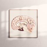 Art Print-Cross Section of Brain
