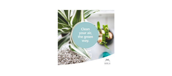 Clean your air, the green way!