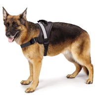 Premium Quality Ruff & Tuff Dog Harness - Medium - Beavers Pet Products