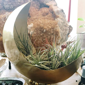 Brass Crescent Moon Planter