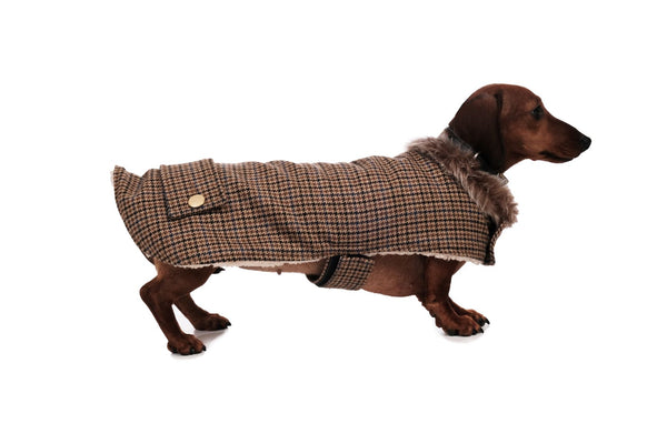 The Dog Coat