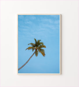 Lonely Palm