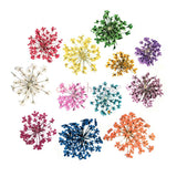 Daily Charme Nail Art Decoration Pressed Dry Natural Flower Set / 12 Colors