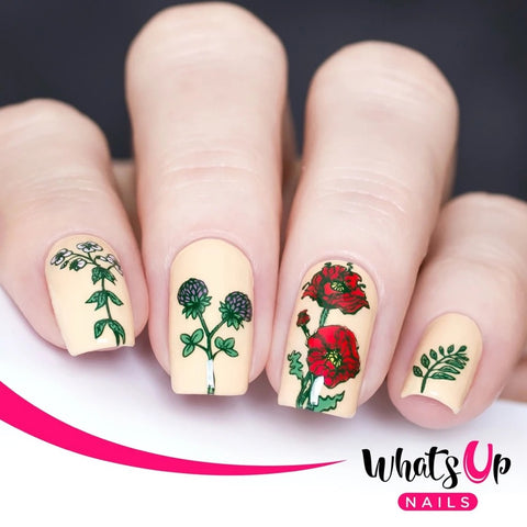 Daily Charme Whats Up Nails Stamping Plate / Floralize Your Texture
