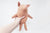 Maileg Small Truffle Pig Baby Toy
